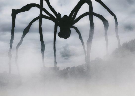 Arachnofobia – lęk przed pająkami